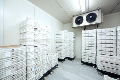 FAS-Refrigeration-walkin-freezer